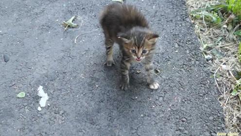 60%的流浪猫,都过不了冬,可实际情况,远比我们想象的可怕
