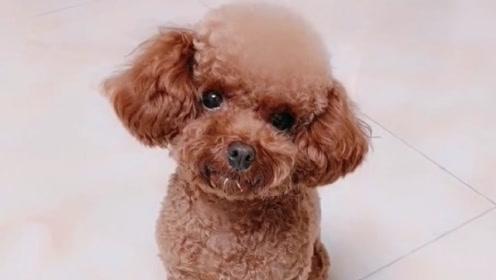 主人说买个新锅可以炖狗肉了,接下来的狗狗是这样的反应