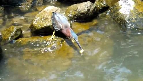 """这只鸟的套路太深,用面包来""""钓鱼"""",要成精的节奏"""
