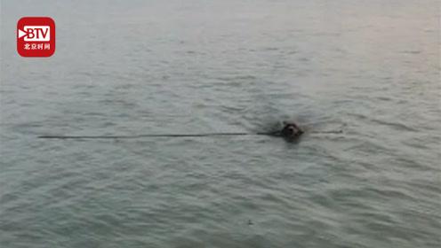 鱼竿被拽入水 金毛下河捡鱼竿带回一条鱼 把围观钓友惊呆了
