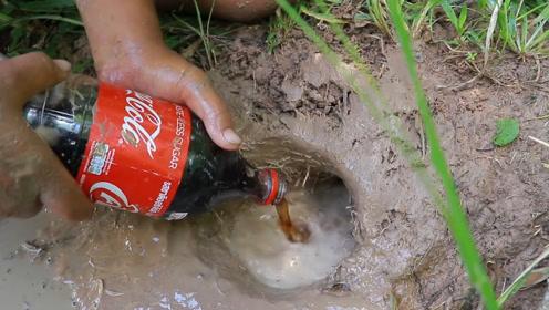 小伙捕鱼不带鱼竿,买了瓶可乐往洞里倒,结果让人大开眼界