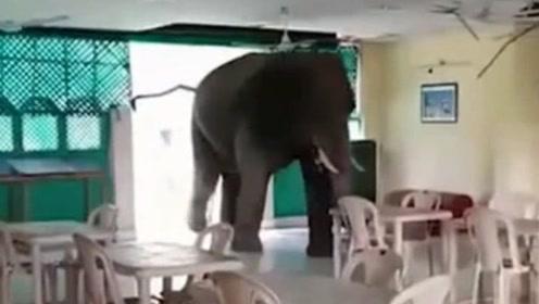 可怕一幕!饥饿大象冲进军营餐厅 损坏桌椅