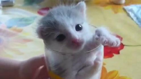 给杯子里的奶猫喝奶,小奶猫喝到停不下来,网友直呼瞬间被它迷住