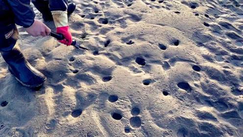 男子赶海发现沙滩成片沙洞,拿铲子一挖全是好货,这下要发财了!
