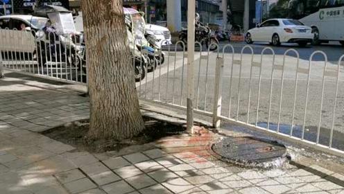 井盖漏水5天街道成河,供水公司:正协商,抢修需要挪树