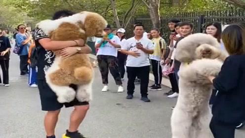 原来撒娇也会传染,大街上看别人狗抱着,非得也让抱着不抱不走!