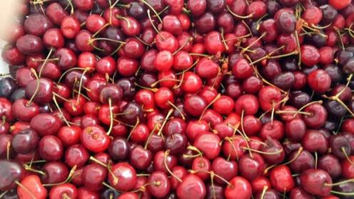 智利樱桃出口量将创历史新高,近九成销往中国