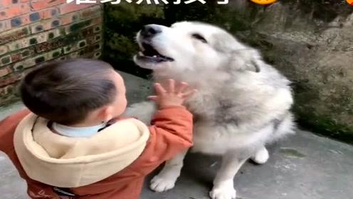 小弟弟要和狗狗玩,看狗狗不情愿的小模样太可爱了,都忍住别笑!