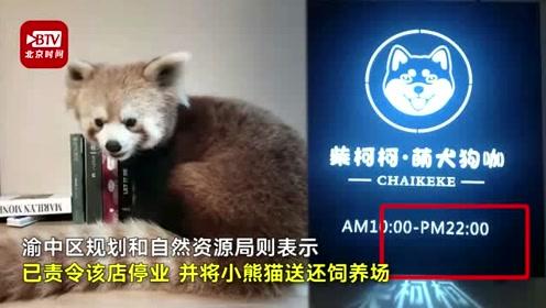 小熊猫现身宠物店被质疑私养贩卖 官方:已责令送还饲养场并停业整顿