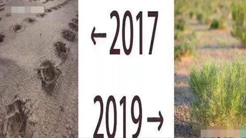 马云天价打造的蚂蚁森林,2017对比2019,官方照片让网友泪目