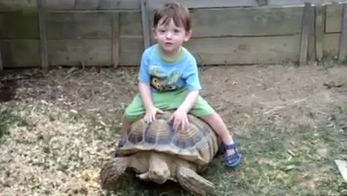 小孩骑着乌龟到处跑,乌龟表示累死了,镜头记录全过程