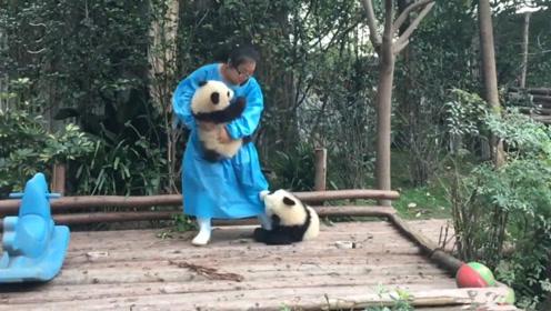 熊猫宝宝争抢宠爱,牢牢抱住奶妈求抱抱,网友:萌化了!