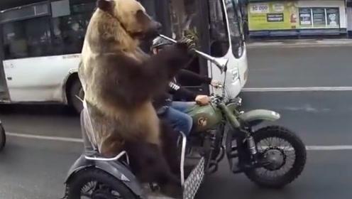 战斗民族的熊有多卑微,还要给主人表演节目,毫无尊严