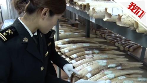 南宁海关移交2.7吨象牙及制品:包括原牙609节 象牙制品742件