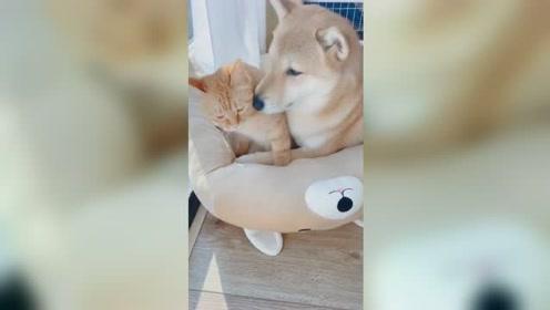 猫狗是一家!猫狗大清早亲亲热热羡煞旁人