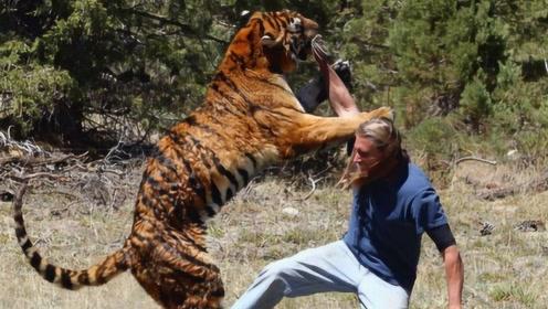"""为什么老虎吃人之后必须""""杀掉""""?专家:不杀的后果很严重"""