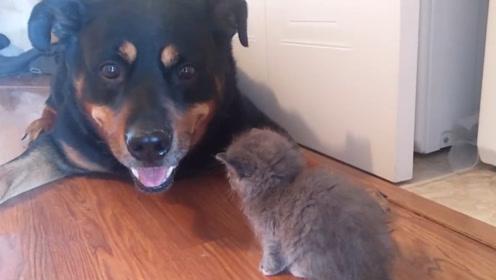 大狗子和小猫咪的一天,猫咪亲近狗子遭拒绝,之后狗子却很宠溺它