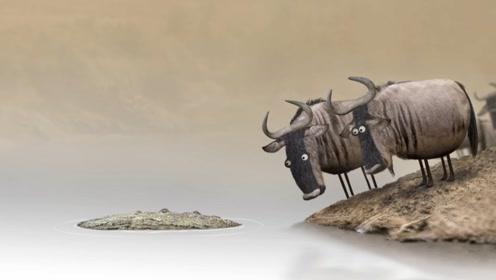 两头牛抬杠,辩论河里的到底是鳄鱼还是木头,却被现实教做人!