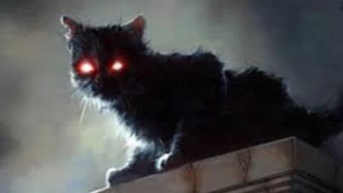为啥人去世以后,猫不能靠近尸体,不是迷信,有科学依据