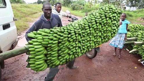 香蕉是怎么摘得?看到全过程,网友:白吃了这么多年