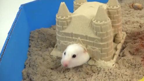 主人脑洞大开自制迷宫塔,将仓鼠放进去,过关就像吃饭一样轻松