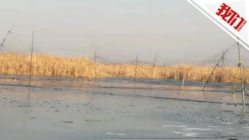 志愿者举报河北白洋淀现5000米长捕鸟网 官方:已组织人员进行拆除