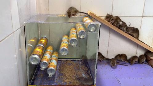 男子用废品做了一个捕鼠神器,老鼠是没活路了,看完真解气!