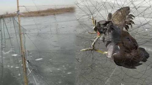 河北白洋淀现5000米捕鸟网阵,志愿者:鸟进去就出不来