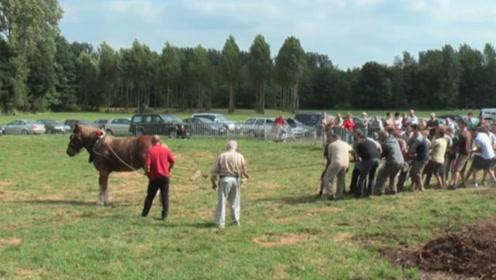 十几名男子和一匹马进行拔河比赛,反而却输得没了脾气,镜头记录比赛全程