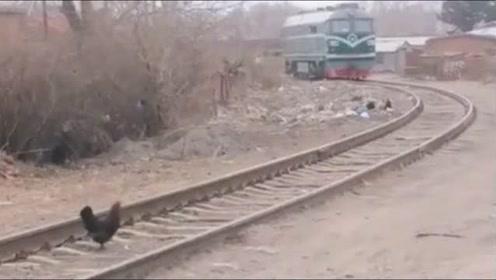 鸡:火车来了,我该往哪边走?好纠结!