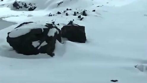 下雪路滑!如果遇到这样的路,连陆巡都不敢动了