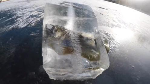 老外冰面发现一条鱼,挖开后乐坏了,更大的收获在下面!