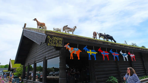 美国最有趣的餐厅,把山羊放到屋顶上养