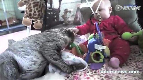 树懒与萌娃在一起是那么得有爱!