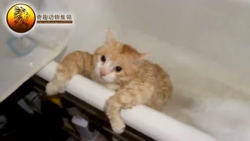 橘猫胖得爬不出来,看见主人笑的要抽了,橘猫表示:还不是你喂的