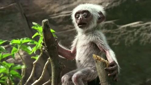扒一扒BBC《荒野间谍》里的那些间谍-卧底机器人小猴子