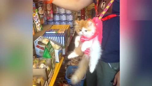 可以放在包包里的猫猫狗狗 还一个比一个聪明