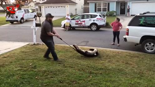 毫无还手之力!2米长鳄鱼夜闯民宅被男子用绳子制服