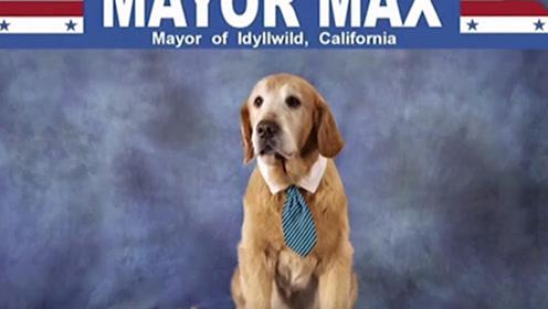这个世界太疯狂!这只狗狗在美国加州小镇当市长