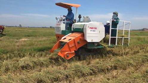 国外简易打捆机一小时打捆13亩水稻秸秆,效率堪比大型打捆机!