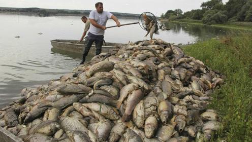 捷克极端高温天气致池塘缺氧 几十吨死鱼浮在水面
