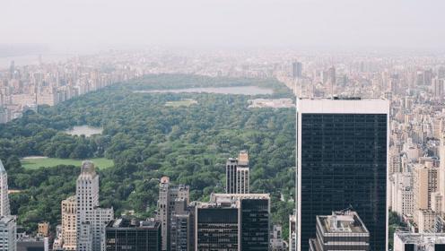 如果城市森林消失了怎么办?