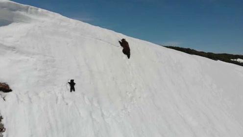 熊宝宝爬雪山的视频火了 数百万网友点赞