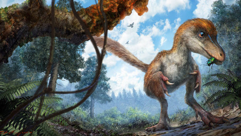 在琥珀中发现的第一只恐龙尾巴