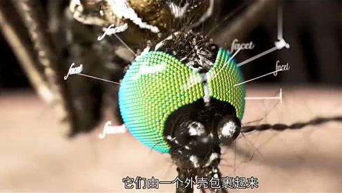 蚊子的嘴很软,为什么能插进人的皮肤