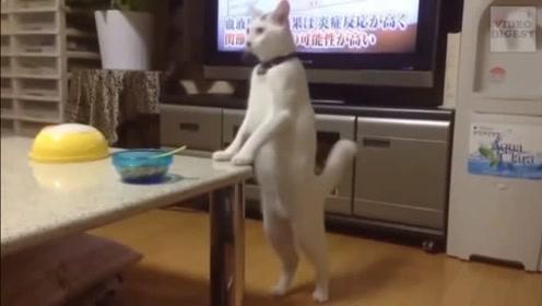 那些年成了精的猫咪,笑死我了