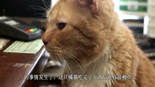 """书店老板好心收留的橘猫,没想到最后竟然是一只""""招财猫""""!"""