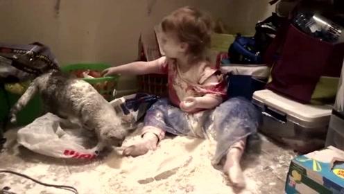 """熊孩子在家中制造""""面粉雨""""将自己染白黑猫变白猫"""