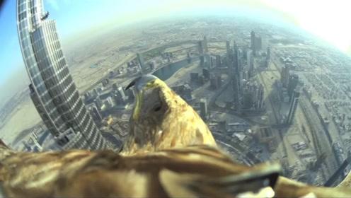 你见过老鹰的视角吗?镜头拍下全过程,看完不可思议!