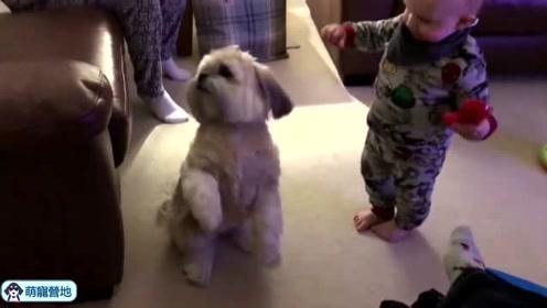 难怪外国人都爱养狗狗和孩子玩,真的给孩子带来太多快乐了!